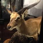Mce Museum Gazelle