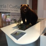 Mcr Museum Brown Bear