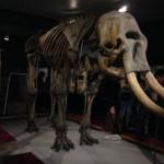 Mcr Museum Elephant
