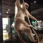 Mcr Museum Monkey