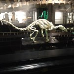 Mcr Museum Skeleton
